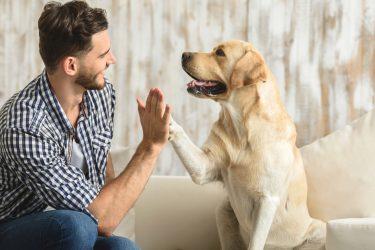 Para las mascotas también hay reglas. ¡Conócelas para ser un buen vecino!